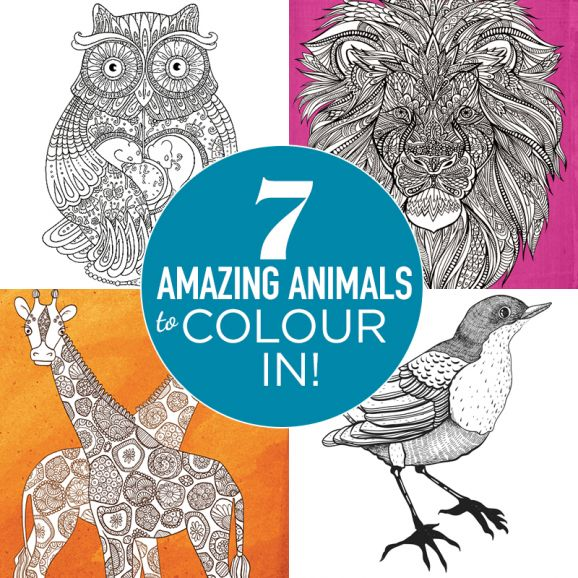 7 Amazing Animals To Colour In