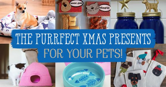 The Purrfect Xmas Presents For Your Pets!
