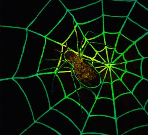 Glow in the Dark Spider Web Halloween Decoration